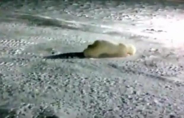 ребенка что с медведем которому кинули петарду последние новости подробнее возможно узнать