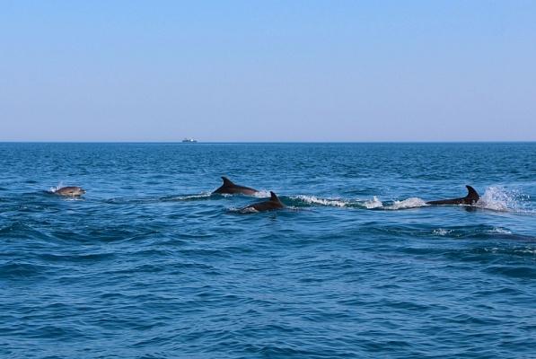 фото морских млекопитающих с названиями